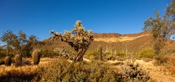 A panoramic desert landscape at the Phoenix Sonoran Preserve in Arizona. Area is covered with dry sandy and dusty soil and a medley of cacti all the way up to the hill. Concept for desert vegetation