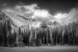 A panoramic grayscale  shot of alpine tree forest at the base of snow capped mountain range