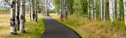 A panoramic image of a bike path winding through a grove of aspen trees in central Oregon near Sisters.