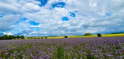 A panoramic shot of a field covered in wildflowers under a blue cloudy sky in the countryside