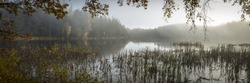 A panoramic view of an eerie lake with tall grass and mysterious forest in the background - perfect for horror scenarios