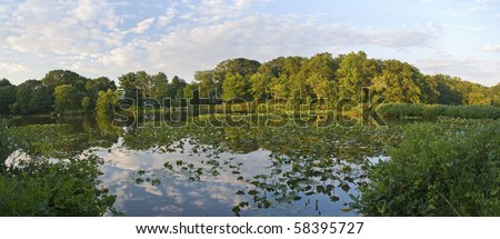 A Panoramic view of lilly pads on Lake Manalapan in Thompson Park, Monroe Township in Middlesex County, New Jersey.