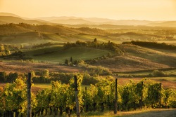 A panoramic view over the hills of Chianti at sunset hour