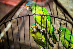 A parakeet is any one of many small to medium-sized species of parrot.