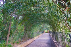 A park alley under canopy of evergreen shrubs. Beautiful alley with flourishing bushes in Andalusien province of Spain.