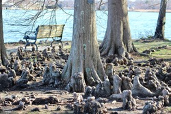 A park bench nestled under the shade of three trees so large that they're roots are coming up out of the ground giving a textured, unique look. The bench overlooks the river just off the walking path.