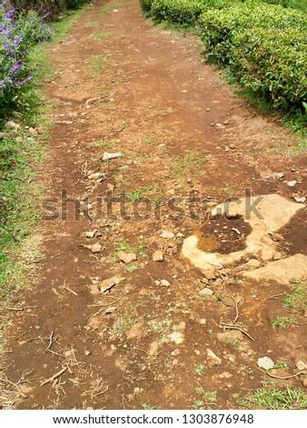 A Park Pathway #1303876948