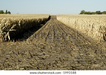 A partially harvested corn field in South Dakota.