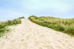 A passage over the sand dune covered with beach grass, List, Sylt, Germany This special  grass protects the sand dunes from eroding.