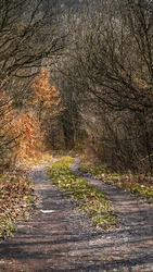 a passageway of trees, a forest road