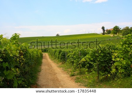 A path across Barolo vineyards in Italy