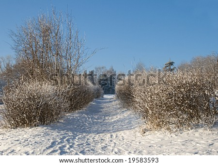 A path between bushes covered with snow