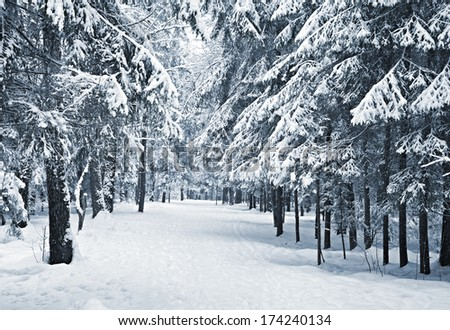 A path between trees covered with snow