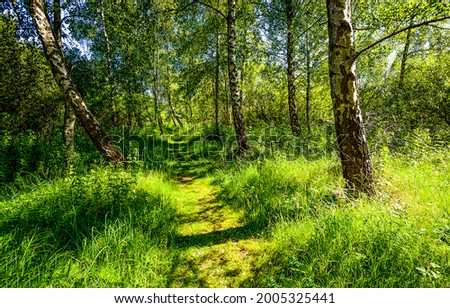 A path in a green forest. Forest path