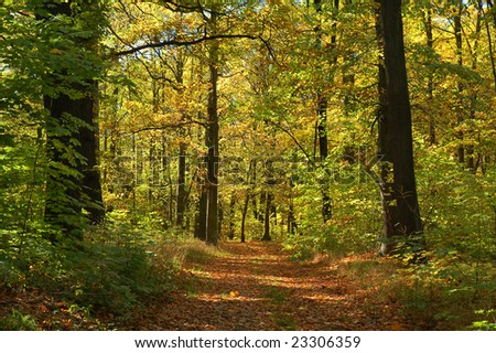 A path in early autumn forest.