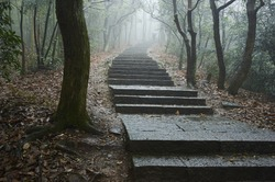 a path in fog