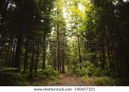 A Path in the Forest #540607321