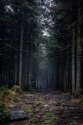 A path in the forest. Dark, sombre mood.