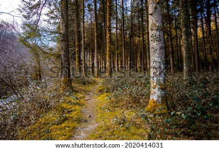 A path in the old forest. Pine forest path. Path in pine forest. Pinewood path