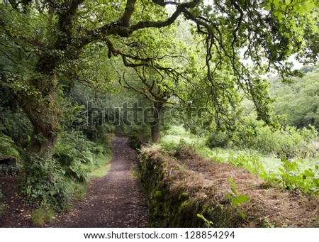 A path leading along old forest and green fields, Dartmoor, Devon, England