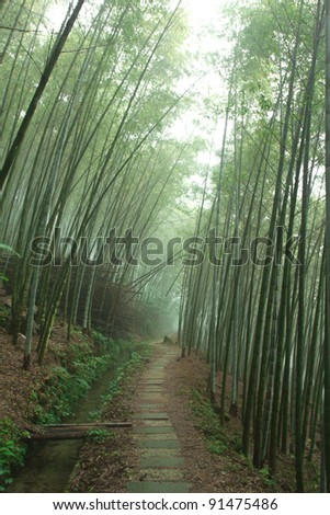 A path leading into a bamboo forest
