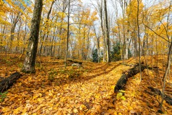 A path leads up a hill in an autumn forest