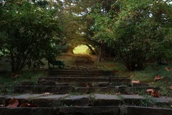 a path of stone steps leading to light in the forest