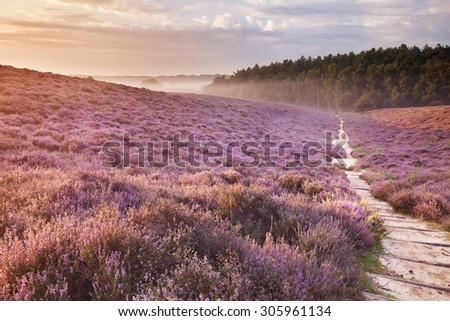 a path through endless hills...