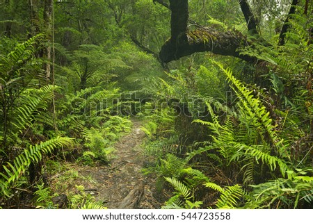 A path through lush temperate rainforest in the Garden Route National Park in South Africa. #544723558