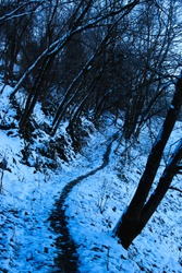 A path through the snow into the woods. Walking path through the snow.