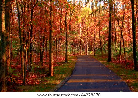 a path through the woods with fall leaves