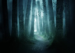 A pathway between trees leading into a dark and misty forest. Photo Composite.
