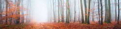 A pathway through the mysterious beech forest in a thick morning fog. Colorful red and orange leaves. Lorraine, France. Atmospheric autumn panoramic landscape. Eco tourism, environmental conservation