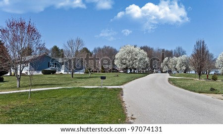 A peaceful neighborhood street with white spring blooms on Dogwood trees and others beginning to get leaves.