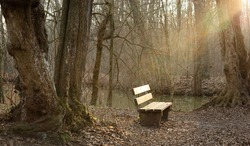 A peaceful spot in the woods