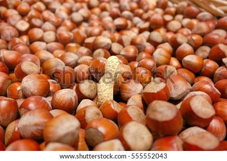 A peanut in a basket full of Hazelnuts.