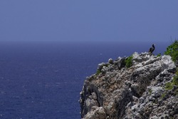 A peek over the edge of the bluff in Cayman Brac. The limestone formation can be seen in the foreground with a brown booby perched atop looking out into the vast open Caribbean sea