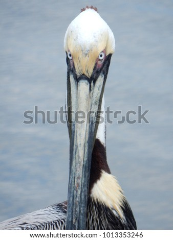 a pelican rules the roost on...