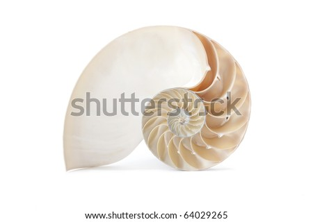 A perfect and amazing fibonacci pattern in a nautilus shell