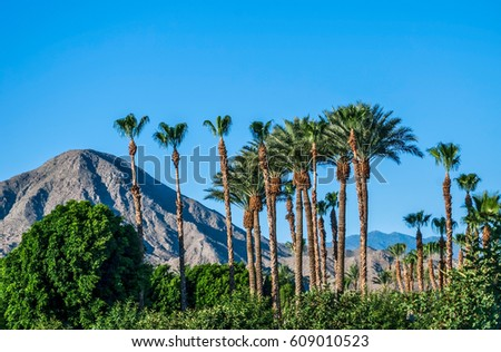 A perfect blue sky, palm trees and the San Jacinto Mountains of Palm Springs California.