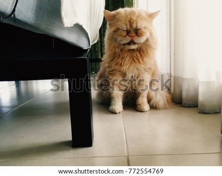 A Persian cat is sitting sleepily on the white tile floor #772554769