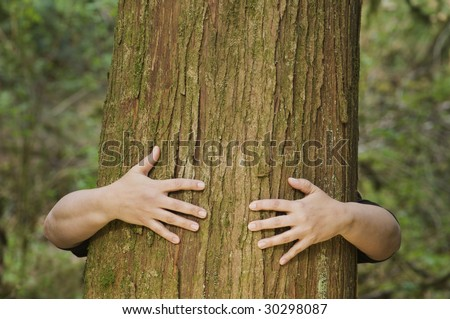 A person hugs a large cedar tree