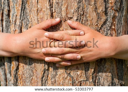 A person hugs the trunk of a large tree