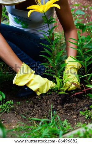a person in gloves working in the garden with yellow lily