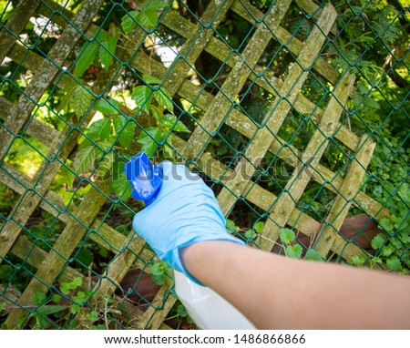 A person killing Poison Ivy with weed killer
