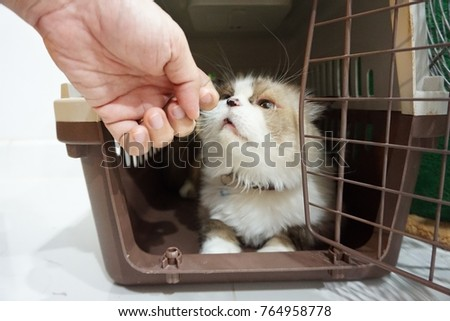 A person playing with a gray fluffy Persian cat with a black nose in a brown basket.