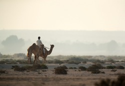 A person riding and travelling with camels in the desert of Bahrain