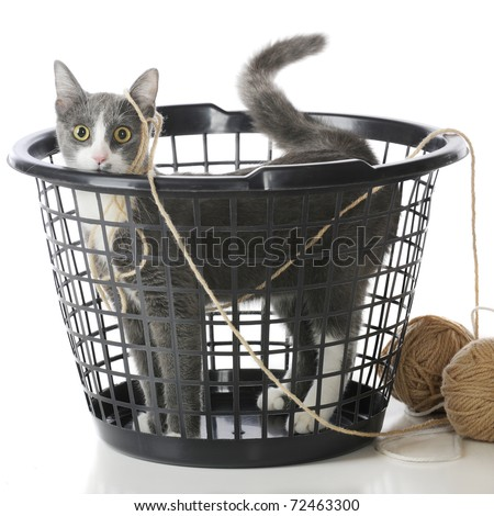 Cat In Laundry Basket. a plastic laundry basket,