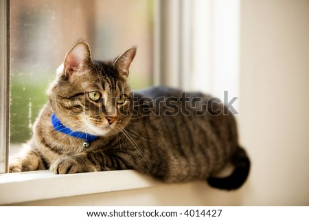 A pet cat laying in a window.  Shallow depth of field with focus on eyes.