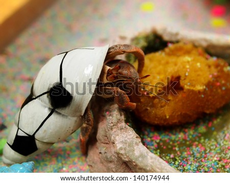 Cute Hermit Crabs With Painted Shells